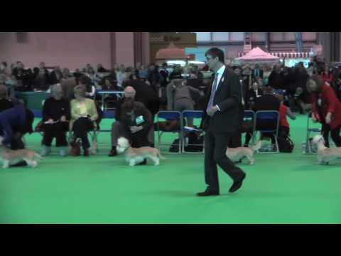 Dandie Dinmont Terriers at Crufts 2010 - Best Dog