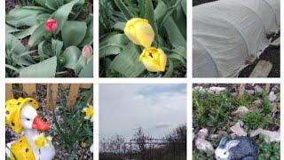Наш участок/сад /огород/мои цветочки