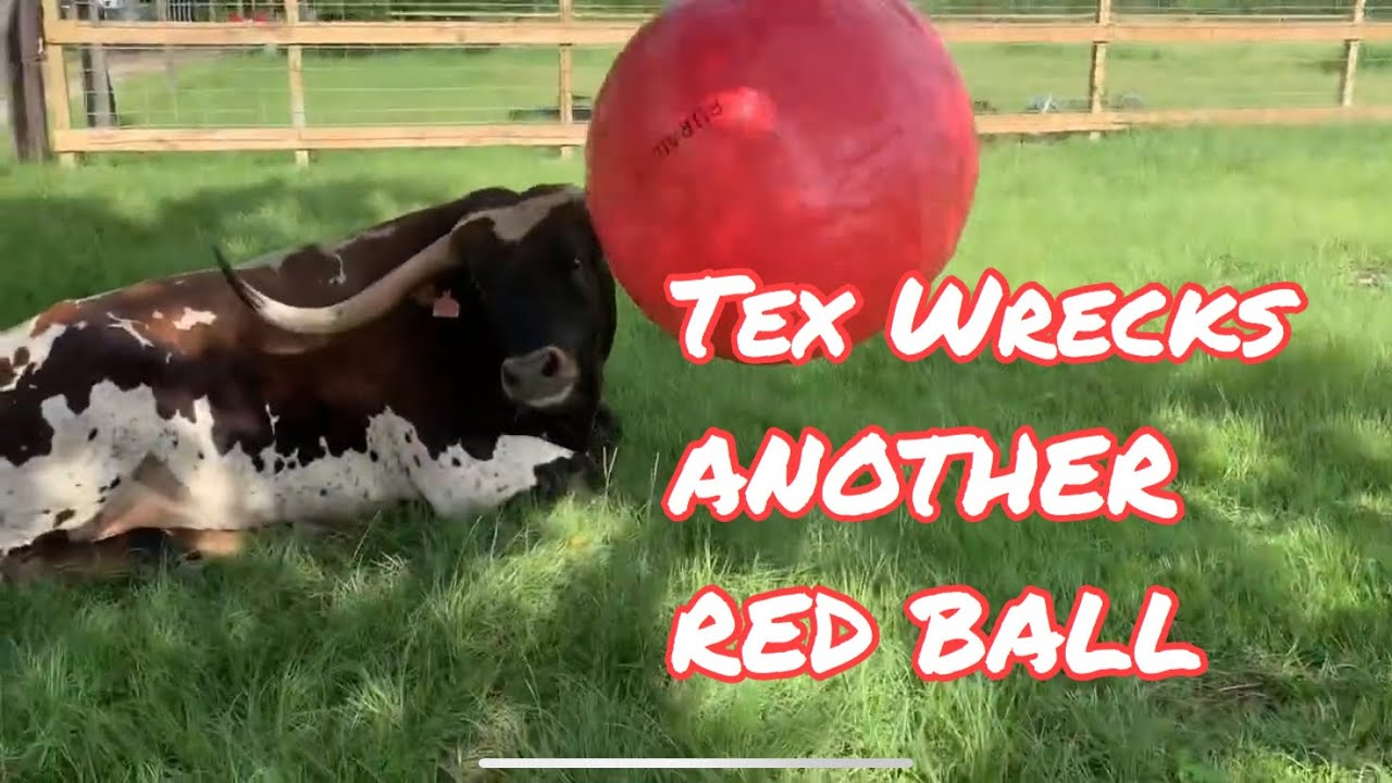 Tex Wrecks Red Yoga Ball