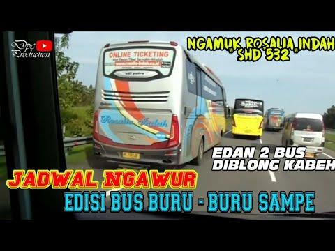 """BURU - BURU SAMPE""    ROSALIA INDAH 532 LARI KESETANAN ! DIKEJAR 3 PO HARYANTO JAM MEPET !"