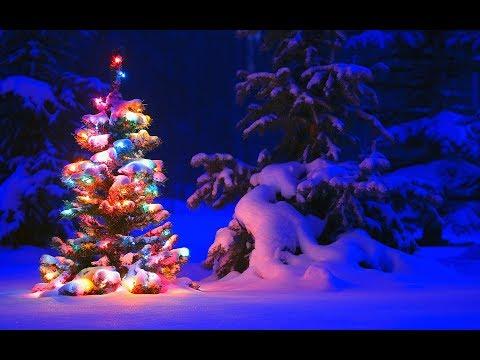 В лесу родилась елочка Новогодняя песенка