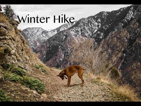 Unedited Vizsla Hike - Video 97