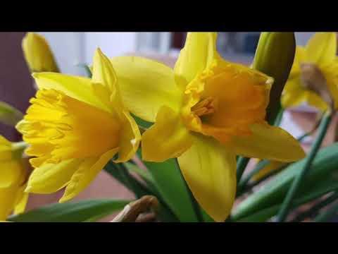 Delibes - Flower Duet