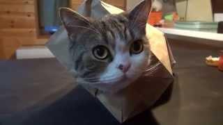 紙袋とねこ。-Paper bag and Maru.-