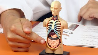 How does the human body work in hindi