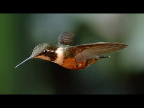 Stunning Slo-Mo Footage of Hummingbirds Hovering in Air