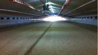 Spreading Wood Shavings/sawdust In Poultry Shed.
