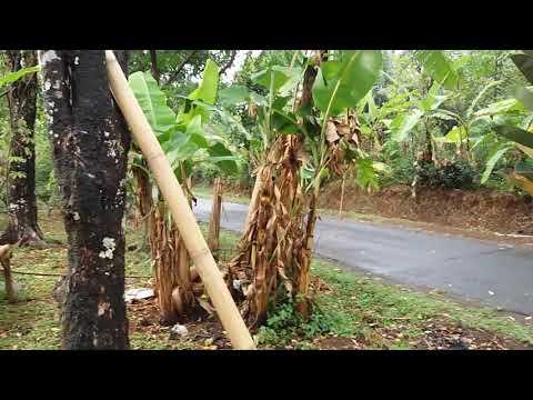 Suasana kampung setelah hujan turun