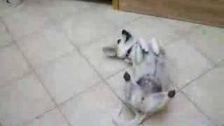 Kamilla - The Cyberdog