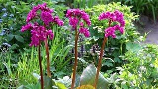 Цветник в тени(Какие цветы растут в тени. Тенелюбивые и теневыносливые цветы., 2016-04-04T20:53:04.000Z)