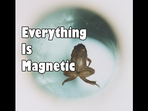 Everything Is Magnetic: Moving Water And Levitating Frogs