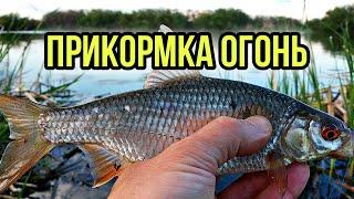 Рыбалка на Поплавок Ловля ЛЕЩА и ЧЕБАКА в Камыше