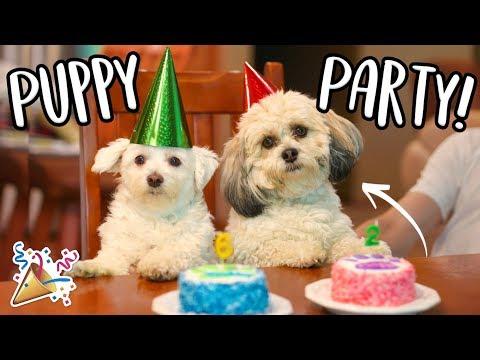 Puppy Birthday Party!! Sydney Serena Vlogs