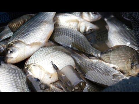 рыбалка на осеннего карася видео