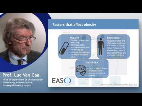 Factors that affect obesity
