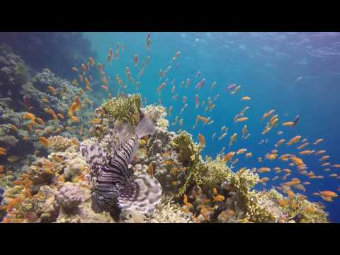 The Dive Experience - Egypt Liveaboard - Daedalus & Brothers