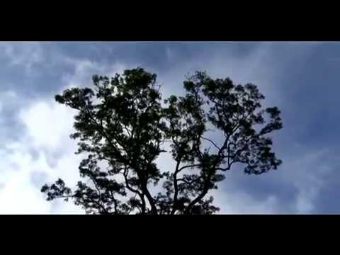 Medicinal Plants of Uttarakhand 31 Species Part 2