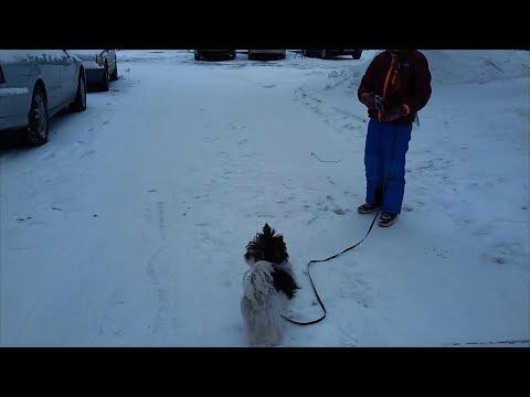 Herding Dog 🐶 Briard 🐕 Gun Dog 🐩 Spaniel 🐺 Guard Dog 🌞 Attack Dog ☀️ Woof ❄️ Berger de Brie
