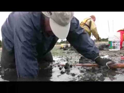 Clam Digging in Coos Bay Oregon, Gapper Clams