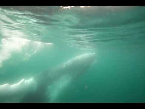 Fan Favorites  | Up close and personal with Humpback Whales