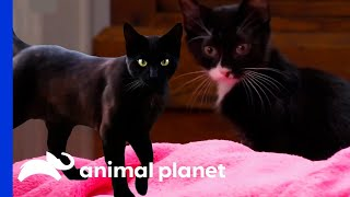 Get Into The Halloween Spirit With These Black Cat Videos!