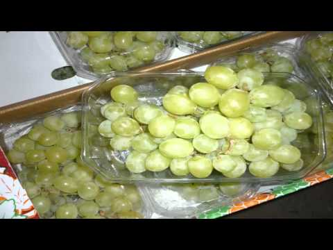 grapes suppliers in egypt,egyptian fresh grapes for sale,grapes farms in egypt