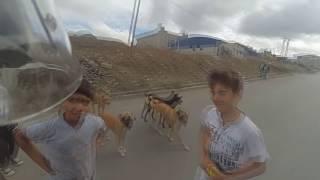 Köpekler saldırdı. :)