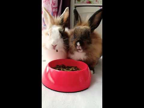 Konijntjes houden van eten
