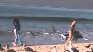 Забавный розыгрыш с чайками на пляже(Огромная подборка фото и видео приколов, анекдотов, прикольных картинок, смешных рассказов и всего что..., 2013-11-20T20:22:33.000Z)