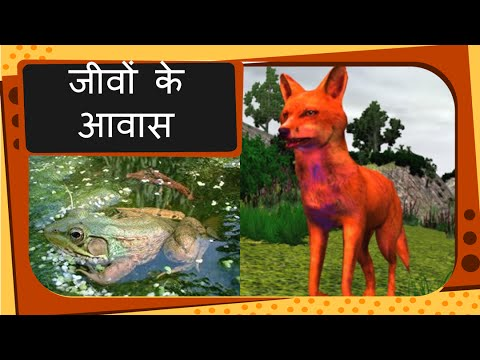 Science - Types of Animal Habitat - Hindi