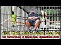 Murai Batu Champion S  Klaten Aksi Dahsyat Duet Gaco Juara C Ijo Laba Laba Cendet Doa Ibu  Mp3 - Mp4 Download