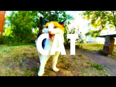 Music videos with Street Cats.  Dancing cats.