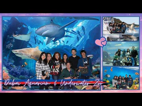 Dubai Aquarium & Underwater Zoo | Dubai 2019