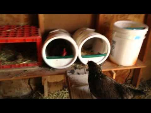 5 Gallon Bucket Nest Box for Chickens