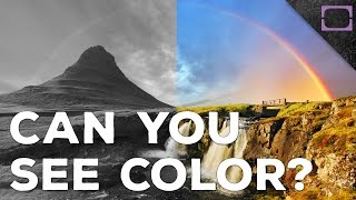 How Do We See Color?