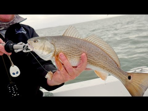 "Tight Line TV Episode 5 ""Cast Away Charter"""