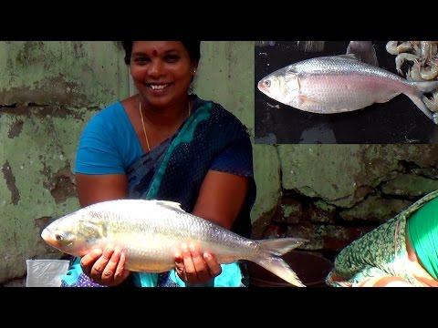 Amazing Fish Cleaning Compilation | Pulasa Fish Slices | Amazing Pulasa Fish Video | Fish Filleting