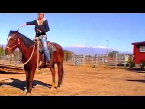 Horse Training: Posting the trot made simple.. www.animalkrackersmonthly.com