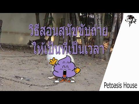 Petoasis : สอนสุนัขขับถ่ายให้เป็นที่เป็นเวลา