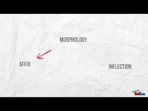 Quick Linguistics lesson: Morphology