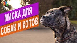 Миска для собак и котов   Обзор миски для собак и котов