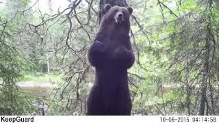 Метки медведя 10.06.2016