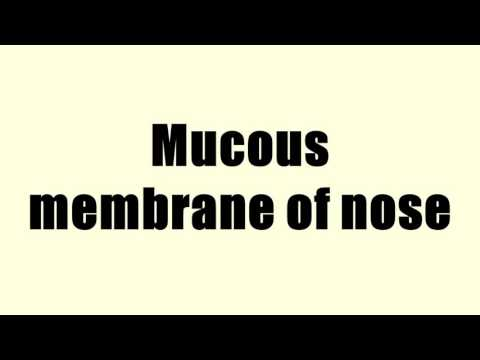 Mucous membrane of nose
