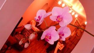 Orchid Орхидея необыкновенной красоты