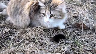Кошка и землеройка