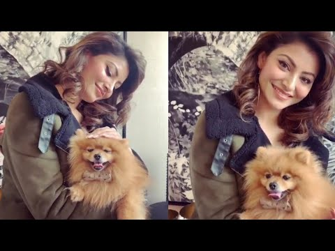 Urvashi Rautela Cute Dogi || Urvashi Rautela cute dogi enjoy with him || bollywood queen ||