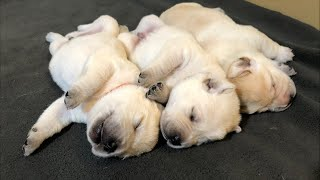 1 hour of puppy cuddles!