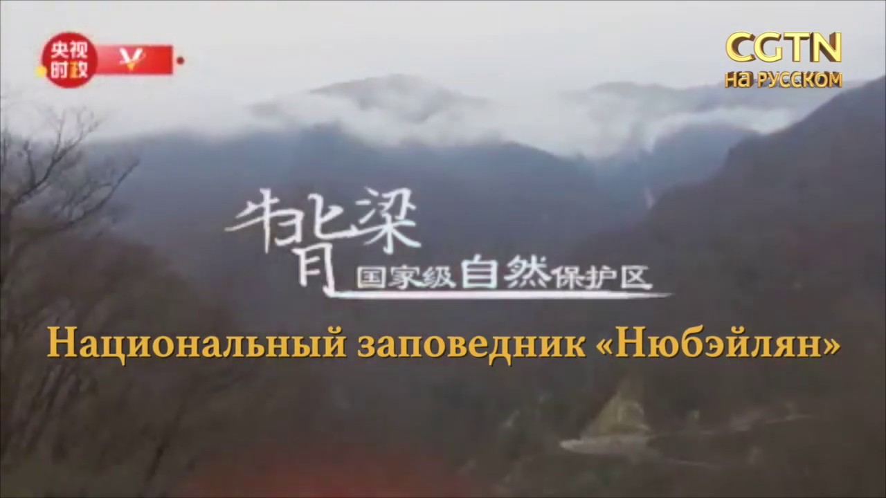 Си Цзиньпин проинспектировал заповедник «Нюбэйлян»