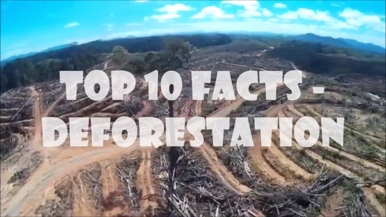 10 Deforestation Facts - YouTube