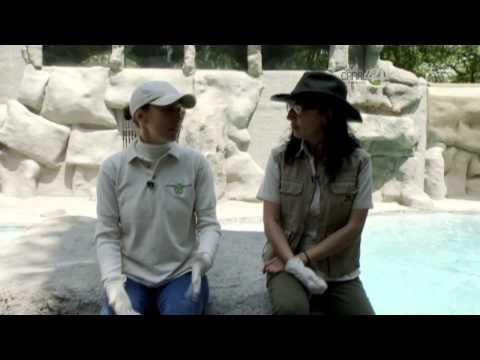 Desde el Zoológico: Ágata la Oso Polar